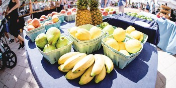 West Palm Beach Green Market Returns to the Waterfront on October 6th