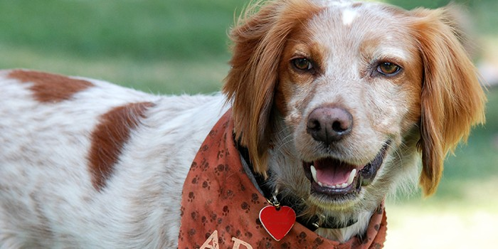 "Humane Society Furry Friends Adoption, Clinic & Ranch to Host ""Ranch Round Up"" Event"