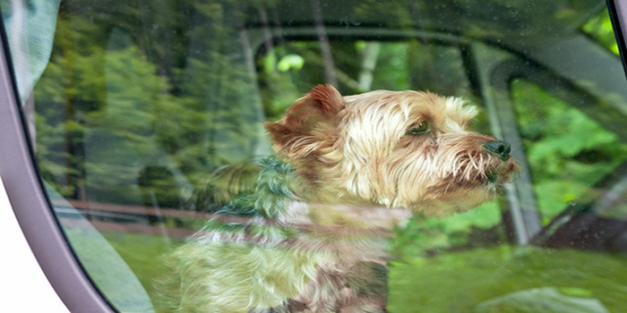 Peggy Adams Animal Rescue League Provides Important Tips to Keep Your Pet Cool During the Dog Days of Summer!