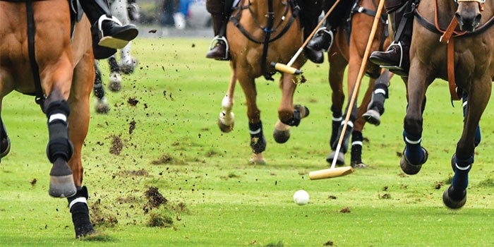 A Day in the Life of a Polo Trainer