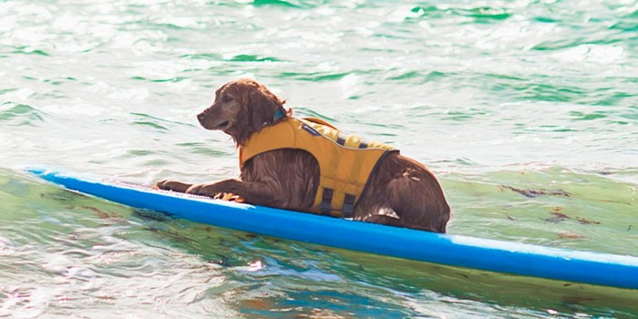 Furry Friends Annual Hang 20 Surf Dog Classic Has Been Postponed