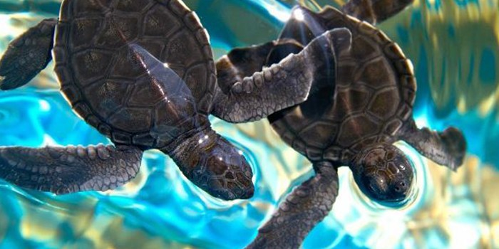 Shell-ebrate Sea Turtles in The Palm Beaches
