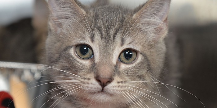 Peggy Adams Animal Rescue League's Kitten Nursery Continues to Save Lives
