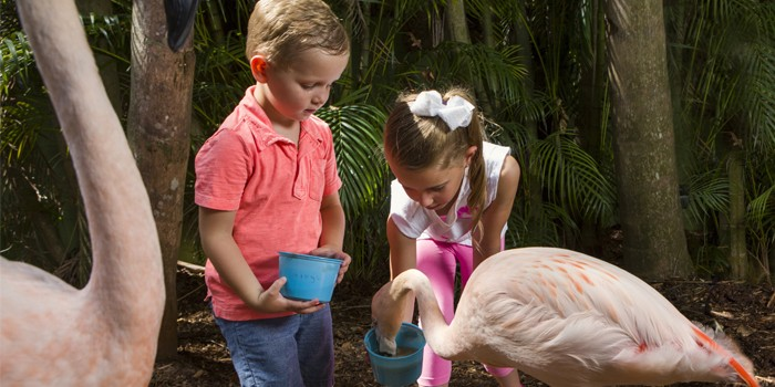Palm Beach Zoo January 2019 Special Events