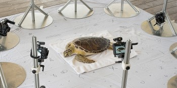 Digital Life Team Creates Animated 3D Models of Sea Turtles From Live Specimens