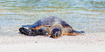 Sea Turtle Release Off Juno Beach Tuesday May 7th, 2019