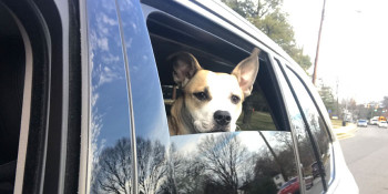 Here Are Six Tips To Keep Pets Safe During COVID-19 and Storm Season