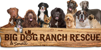 U.S. Army Soldiers Volunteer to work with dogs at Big Dog Ranch Rescue prior to their deployment