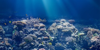 Building Artificial Reefs for Life