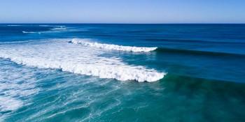 "Loggerhead Marinelife Center is Holding the 6th Annual ""Run 4 The Sea"""