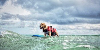 Surf With Your Furry Friends At The Annual Hang 20 Surf Dog Classic