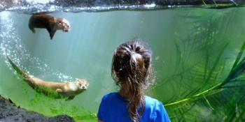 Things To Do This June At The Palm Beach Zoo