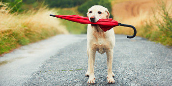 Keep Your Pets Safe During Storm Season
